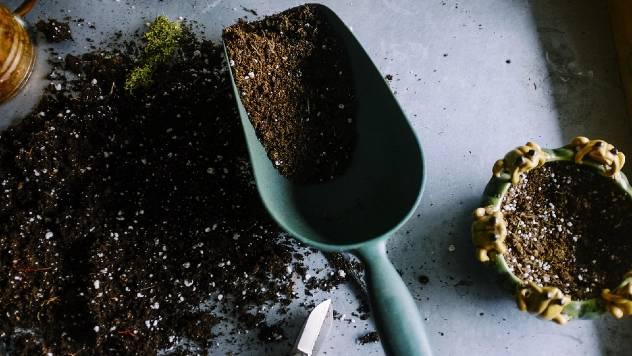 Kako prepoznati kvalitetan univerzalni supstrat za saksijsko cvece - © Pixabay