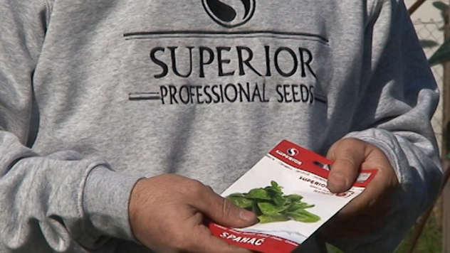 Seme spanaća - ©Agromedia