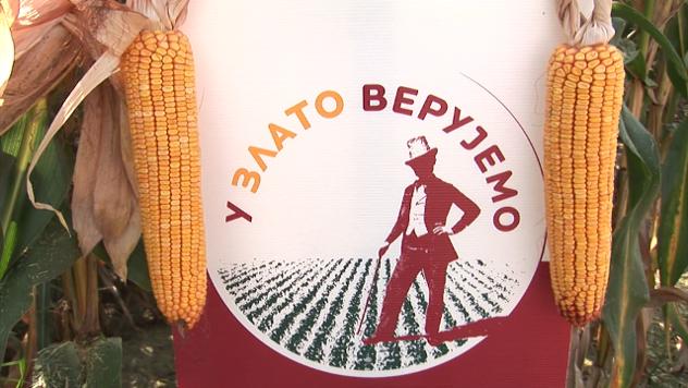 Hibrid kukuruza Sremac - ©Agromedia