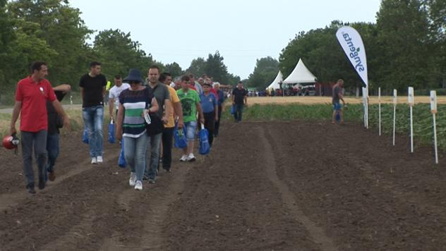 Dan polja kompanije Syngenta - ©Agromedia