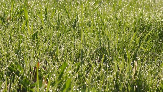 6 saveta kako da obnovite travnjak i pokrijete