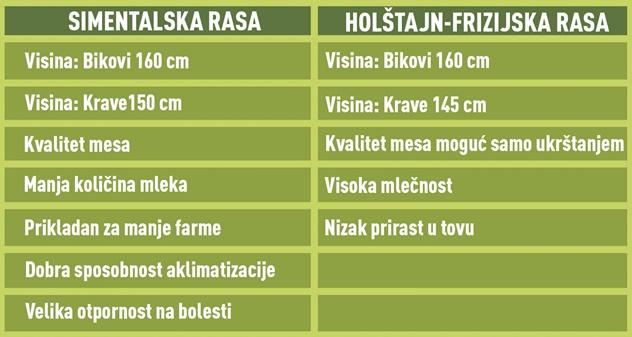 Simentalska i holštajn-frizijska rasa goveda - © Agromedia