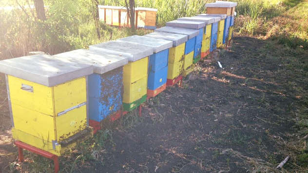 Priprema pčela za zimu - © Foto: Danijela Jankov