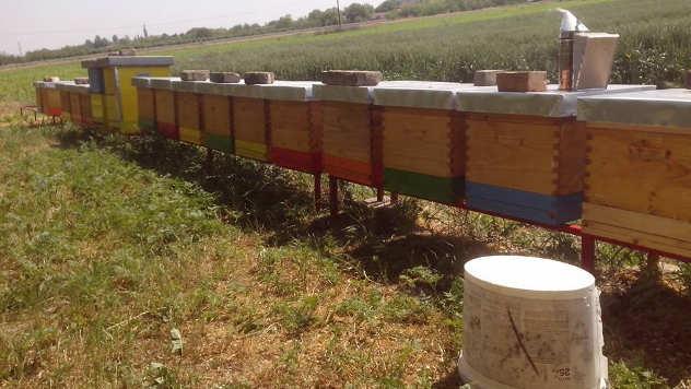 Košnice Oskara Ača, pčelara iz Ruskog Sela - © Foto: Danijela Jankov