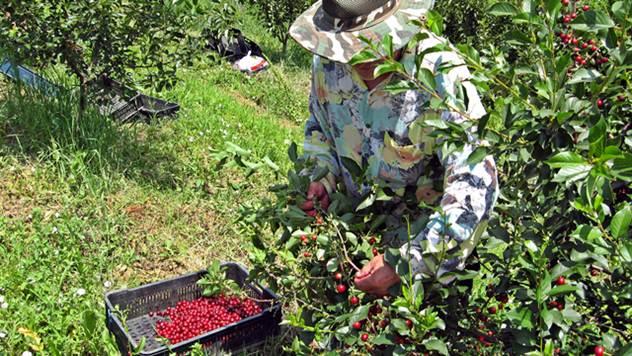 Za sezonce najviše posla ima u poljoprivredi - © Agromedia
