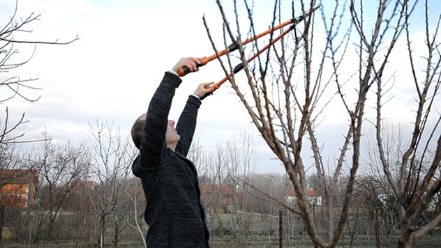 Teleskopske makaze za rezanje visokih grana sa ravnom oštricom - © Agromedia