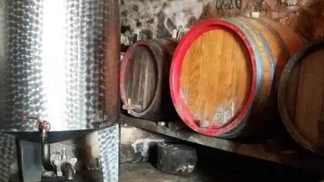 Svake godine se proda flaša više domaćeg vina - © Julijana Kuzmić / Agromedia