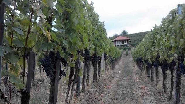 Pravljenje vina - © Agromedia