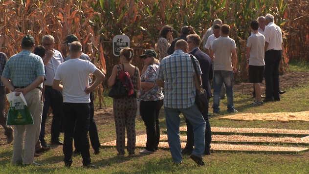 Dani polja Institut za kukuruz ZP - © Agromedia