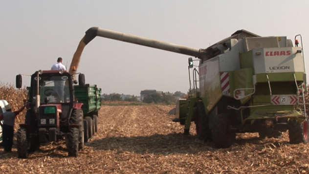 Dan polja Instituta za kukuruz Zemun polje - ©Agromedia