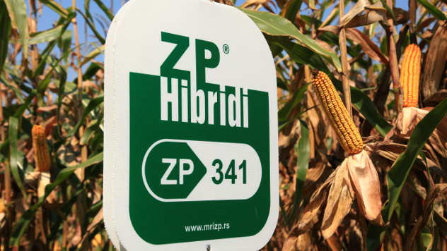 ZP hibrid kukuruza - ©Agromedia