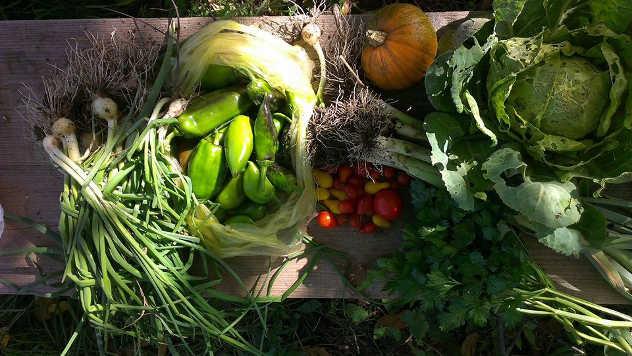 Povrće iz Baštališta - iz arhive fotografija