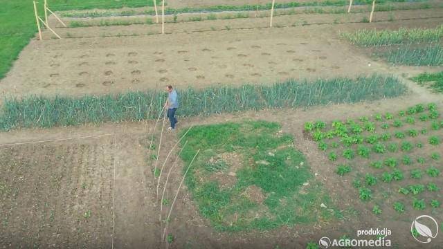 polovni traktor - © AgromediaKako ORGANIZOVATI proizvodnju povrća u bašti ZA JEDNU PORODICU