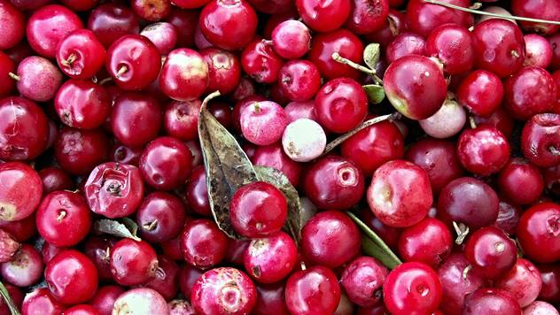 Ubrani plodovi brusnice - © Pixabay