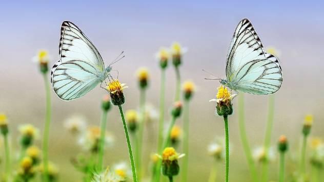 Zašto je važno saditi autohtone vrste biljaka i cveća? - © Pixabay
