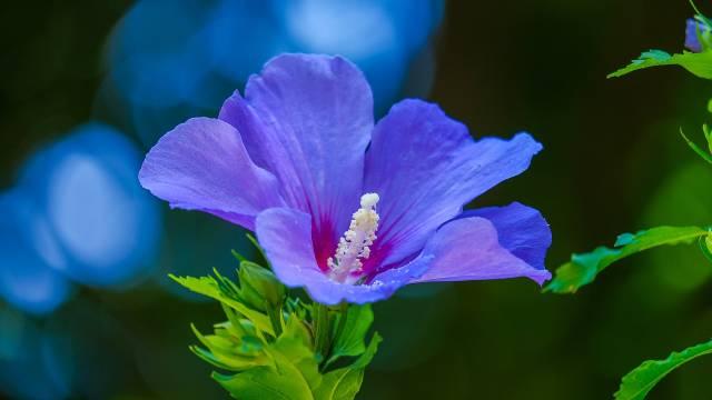 Osetljivi ste ili skloni alergijama? U ovom cveću možete da uživate bez straha od iritacija - © Pixabay
