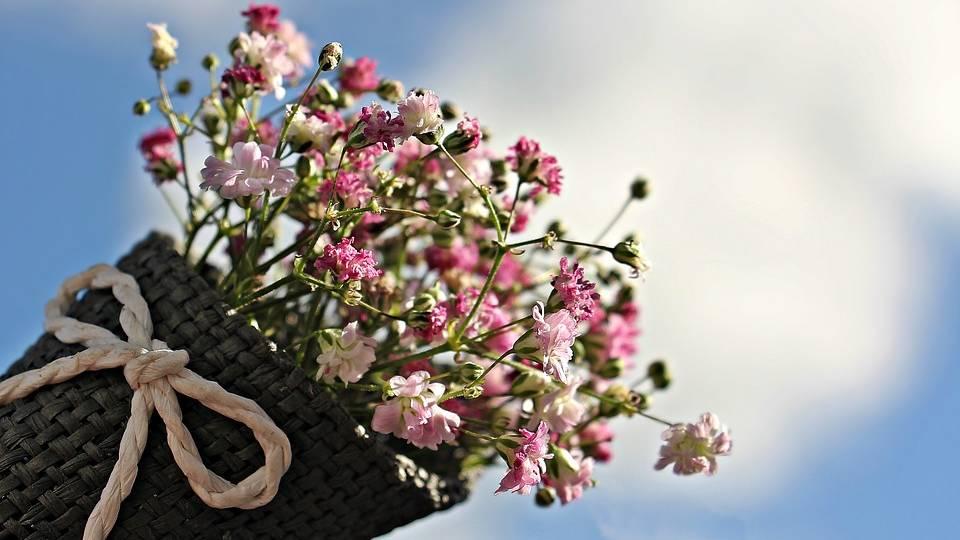 Kako se gaji šlajer – najšarmantniji ukras buketa- © Pixabay