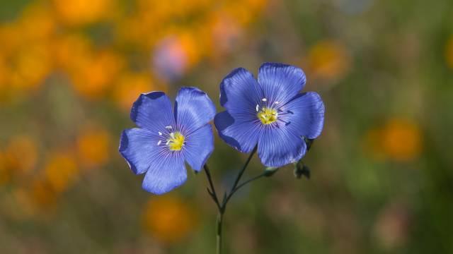 Osetljivi ste ili skloni alergijama? U ovom cveću možete da uživate bez straha od iritacija - © Pixabay - © Pixabay