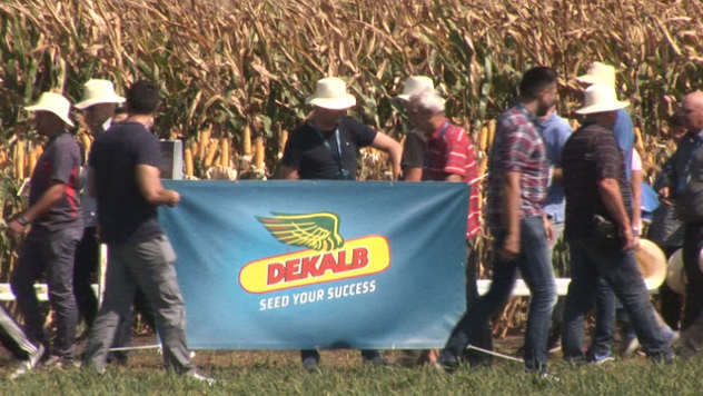 Dan polja kompanije Dekalb - ©Agromedia