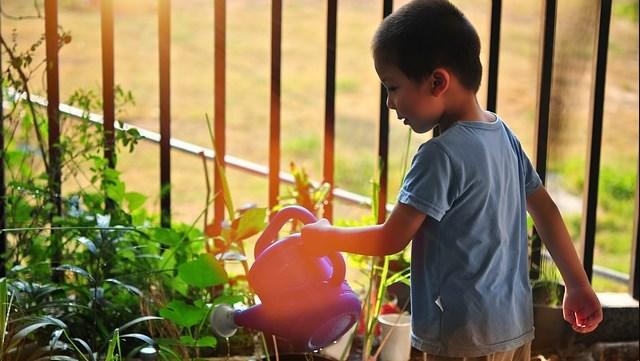 Zašto deca treba da nauče da gaje svoju hranu? - © Pixabay