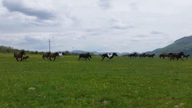 Konji - ©Agromedia