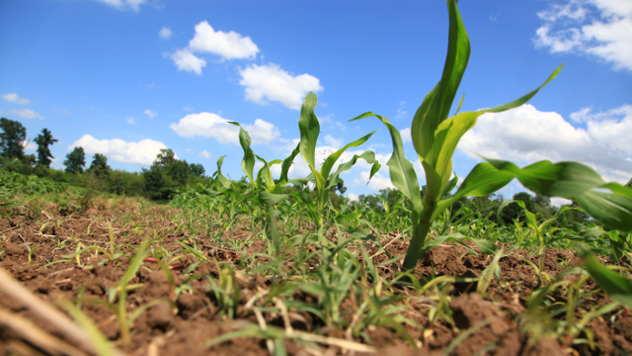 Od kojih faktora zavisi efikasnost herbicida - © Agromedia