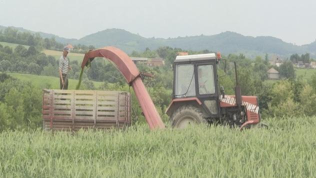 Koje žitarice se gaje u zapadnoj Srbiji - © Dejan Davidović/Agromedia