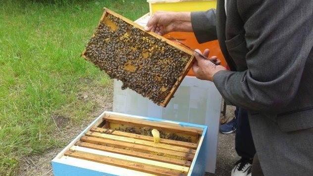 Bespovratna sredstva za nabavku pčelinjih društava i opreme za pčelarstvo - © Agromedia