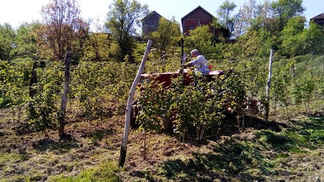 Rad u malinjaku - © Dejan Davidović