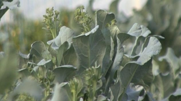 Organsko povrće - ©Agromedia