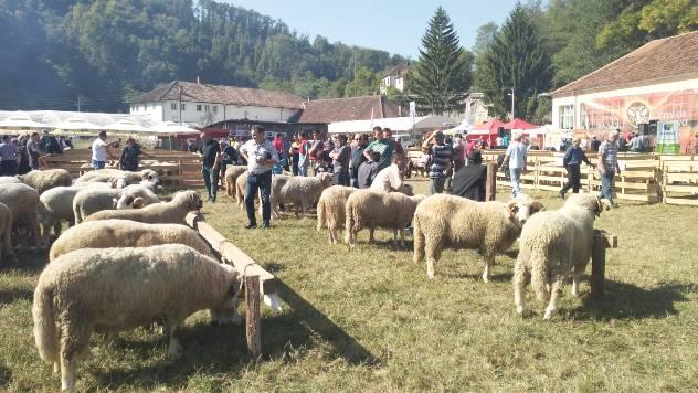 Ovčarstvo Valjevo - © Dejan Davidović /Agromedia