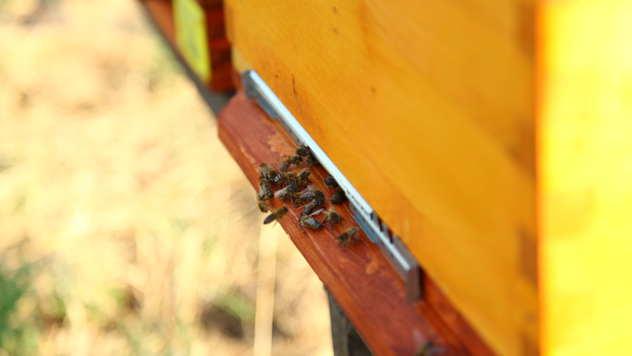 Pčele - ©Agromedia