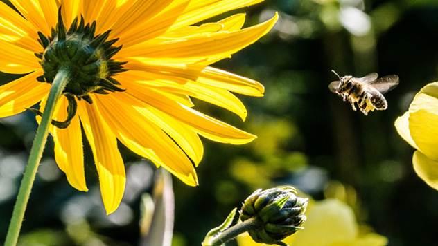 Pčele ipak više vole cveće koje raste na selu - © Pixabay