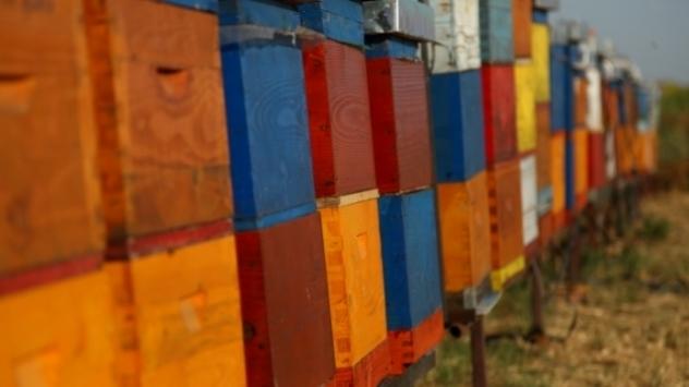 Javni poziv za dodelu podsticajnih sredstava u pčelarstvu - © Pixabay