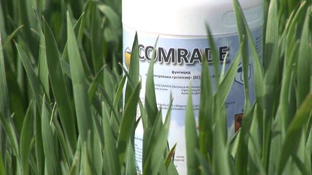 Preparat za zaštitu pšenice - ©Agromedia