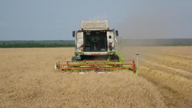 Nikol pšenica - ©Agromedia
