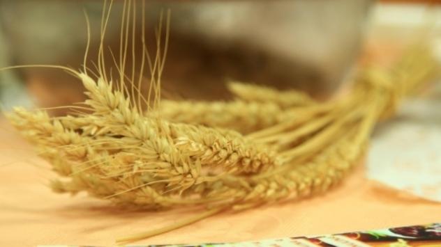 Pšenica - © Foto: Agromedia