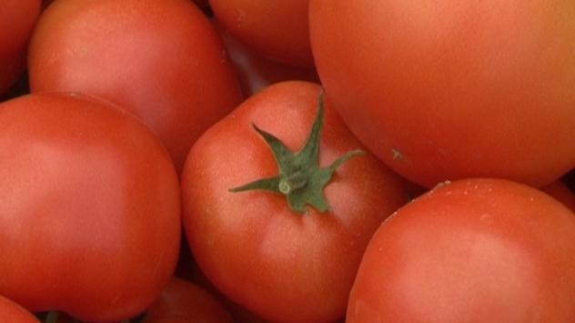 Zreo paradajz - © Agromedia