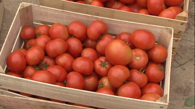 Krupniji i sočniji plodovi paradajza u samo 4 koraka - © Agromedia