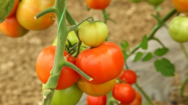 Primenite ove trikove i imaćete paradajz savršenog ukusa - © Pixabay