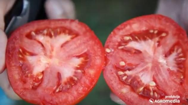 Iskusan povrtar savetuje: Kako ZARADITI od uzgoja povrća u plasteniku? - © Agromedia