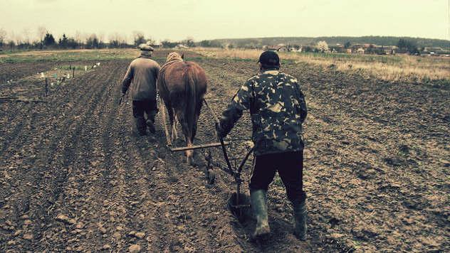 Radni konj - ©Pixabay