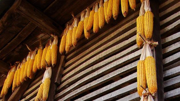 Sladištenje kukuruza - @Agromedia