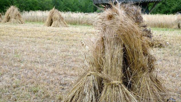 Ratarski usevi u polju - ©Pixabay