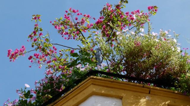 Urbano baštovanstvo: Kako da gajite voće i povrće na krovu zgrade - © Wikimedia
