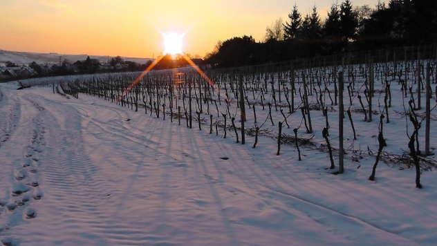 Vinogradi pod snegom - © Pixabay
