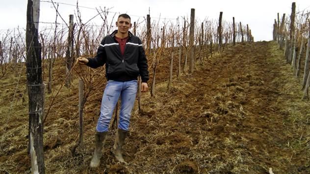 Porodica Damnjanović se uspešno bavi gajenje vinove loze - © Dejan Davidović