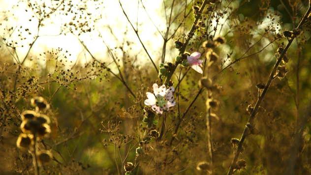 Biljke u cvetu - ©Agromedia