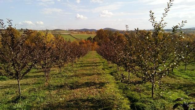 Troškovi podizanja voćnjaka - © Dejan Davidović/Agromedia