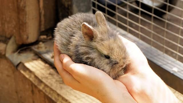 Kako uspešno da sačuvate svoje zečeve od zime  - © Pixabay